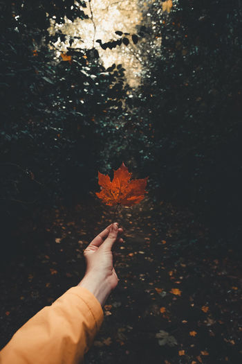 Cropped hand of woman holding leaf during autumn