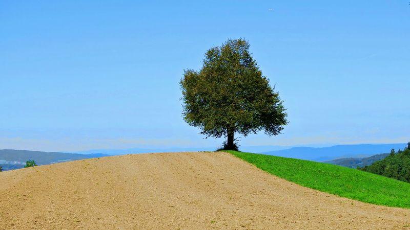 Lonely tree Adliswil Blue Felsenegg Landscape Lonely Tree In Field Sky Switzerland Tree Zürich