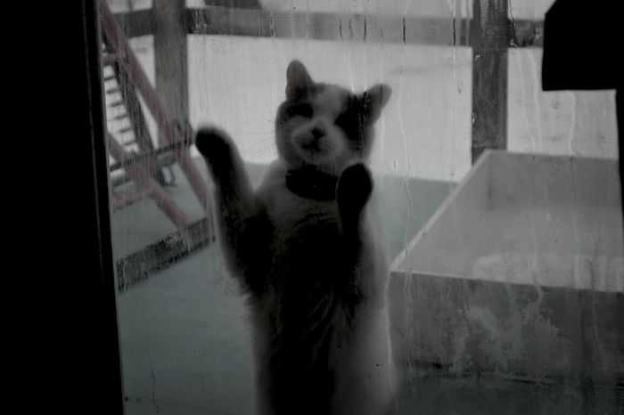 kitty.. Nikon D3100 Kitty MonochromePhotography Pet Photography