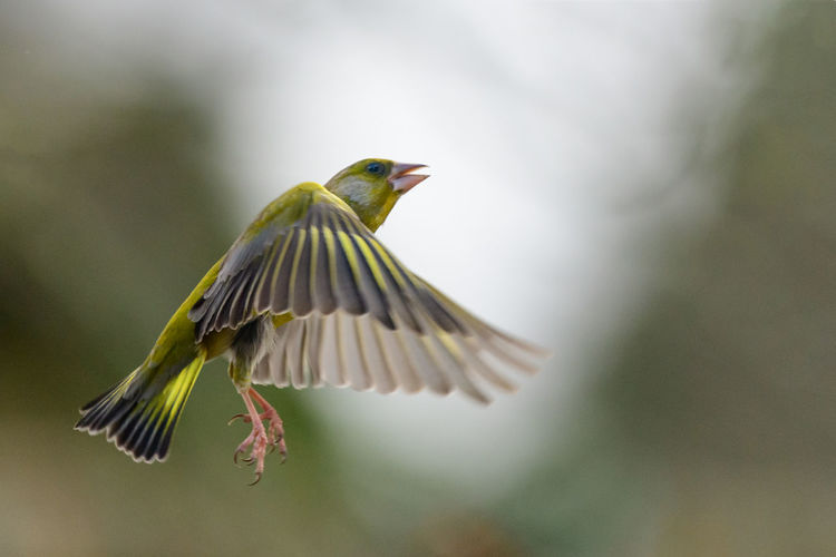 Close-up of bird flying