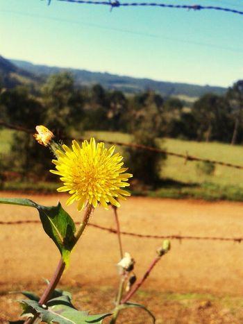 Nature Flower Tranquility Brazil Santacatarina  Caçadorsc Sextafeira Flowers