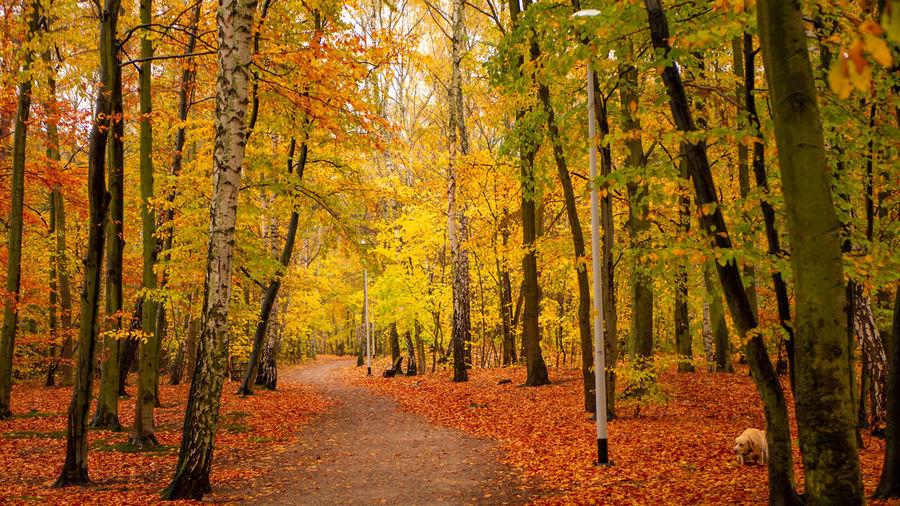 Amazing park of