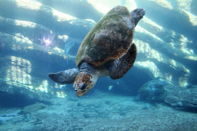 Animal Themes Beauty In Nature Marine Life Ocean Sea Life Sealifeaquarium Tortoise Water Market Reviewers' Top Picks