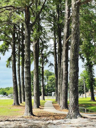 Empty road along trees in park