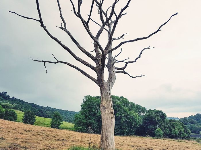 Tree Rural Scene Nature Outdoors No People Bare Tree Landscape Day Sky Beauty In Nature Magic Eery Branches Halloween Scenics Trees Landscapes Tranquil Scene Freshness Magical Tree Yorkshire Beauty In Nature Tree Nature Agriculture The Week On EyeEm