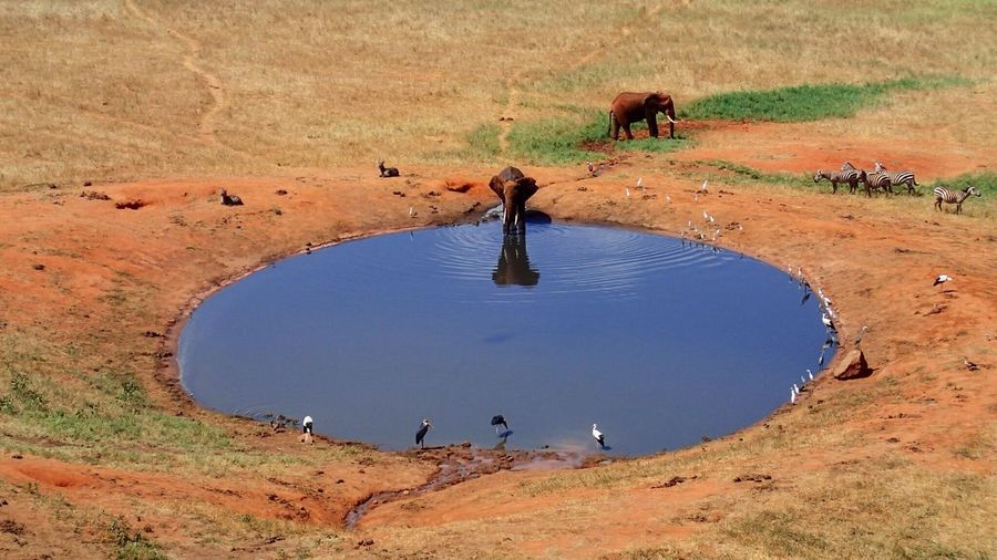 Scenic view of elephant drinking water from pond