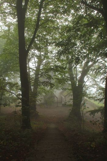 Been There. Tree Nature Forest Tranquility Landscape Tranquil Scene Beauty In Nature No People Growth Scenics Branch The Way Forward Outdoors Fog Day Chapel Nature Tree Wood