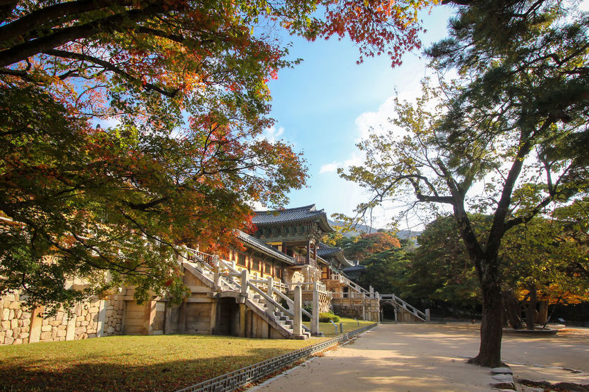 Bulguksa temple in Gyeongju during autumn season in South Korea Ancient ASIA Autumn Buddhism Bulguksa Culture Fall Gyeongju Historic Historical History Korea Korean Outdoors Park Popolar  Season  South Korea Temple Tour Tourism Travel UNESCO World Heritage Site