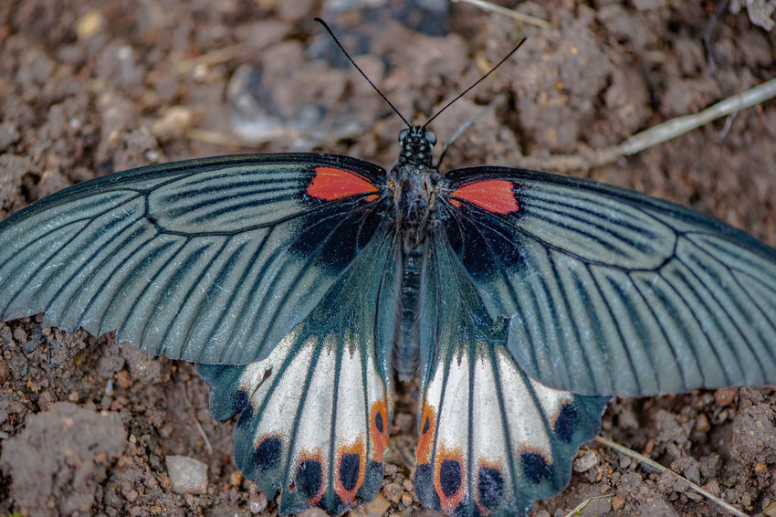 Ziseetheworld Ziwang Jiuhuashan China Animal Wing Insect Animal Wildlife Close-up Animal Themes Invertebrate Animal One Animal Beauty In Nature Butterfly - Insect Focus On Foreground Spread Wings Outdoors Animal Markings Plant Butterfly