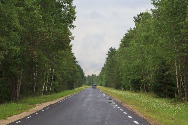 Road in the forest Road Transportation Tree Plant Direction The Way Forward Green Color Nature Day Diminishing Perspective Sky Sign Mode Of Transportation Growth Symbol Road Marking Marking Land Vehicle Cloud - Sky Outdoors Road Trip Forest