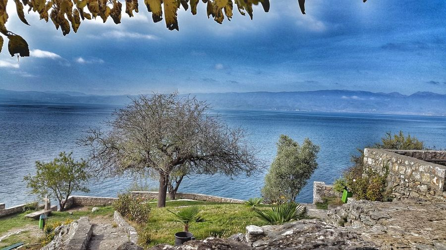 Nature Nature_collection Nature Photography Naturelovers Naturetree Ohrid Ohridlake Jovankaneo Autumn🍁🍁🍁 Autumn Colors Outdoors No People