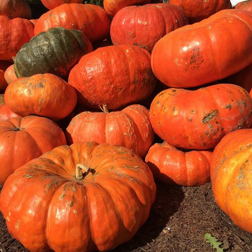 Close-Up Of Pumpkin Pumpkins For Sale