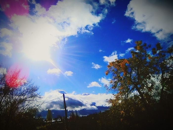 blue skies yellow trees EyeEmNewHere Albany Oregon Fall Trees Fall Trees And Sky Tree Sky Cloud - Sky Close-up Shining Sun Streaming Sunbeam