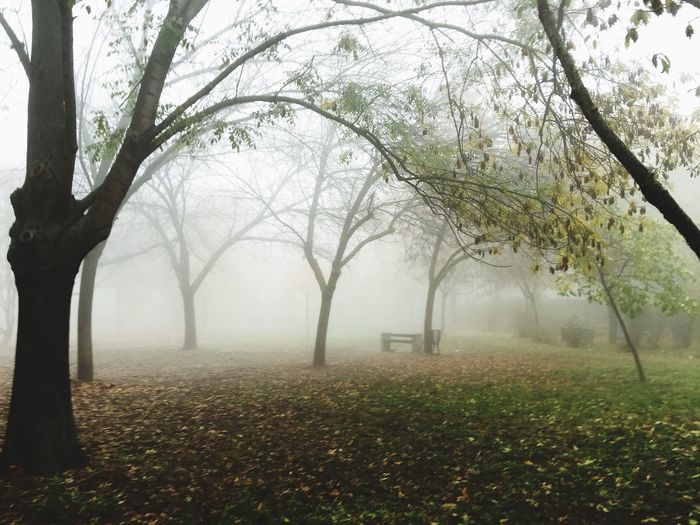 Trees Growing On Field In Park During Foggy Weather