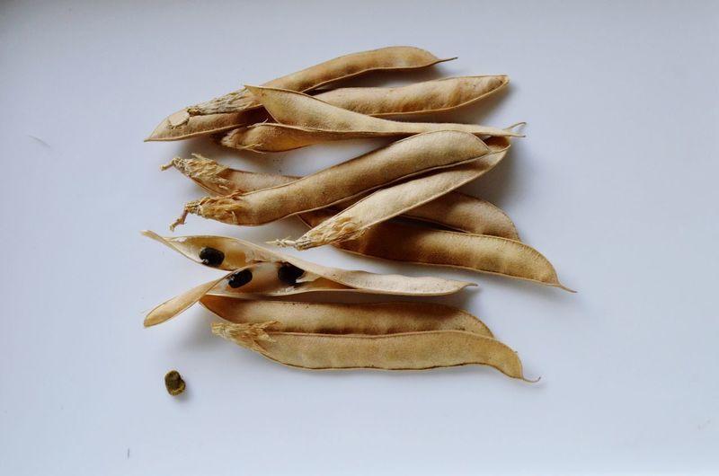อัญชัน ไม้เลื้อย สมุนไพร เม็ดอัญชัน เอื้องชัน เมล็ดพันธุ์ Clitoria Ternatea Seeds