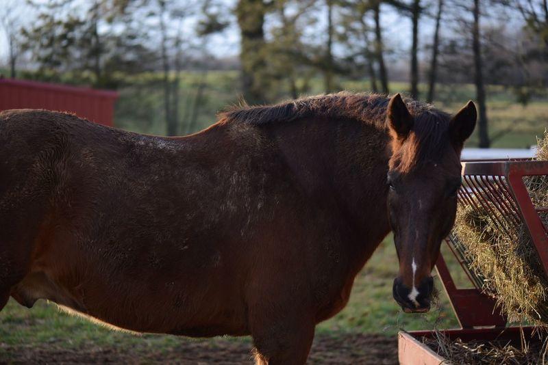 Horse Horses Taking Photos Nikkor Nikond600 Ilovehorses 105mm Connecticut