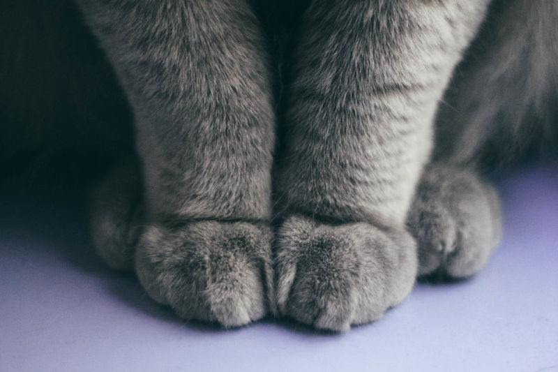 Paw Animal Body Part One Animal Close-up Animal Cat Pets Domestic Domestic Animals Relaxation Calm Calmness Cats Cats Of EyeEm Paws Meow Softness British Shorthair Kitty Peace