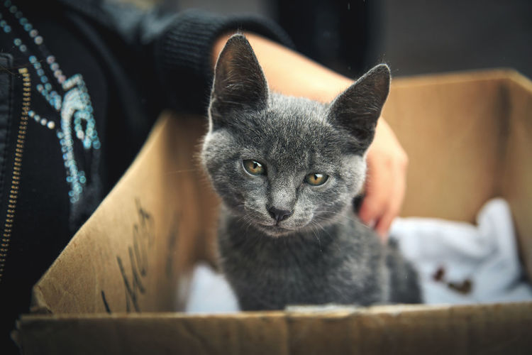 Midsection of owner stroking kitten in cardboard box