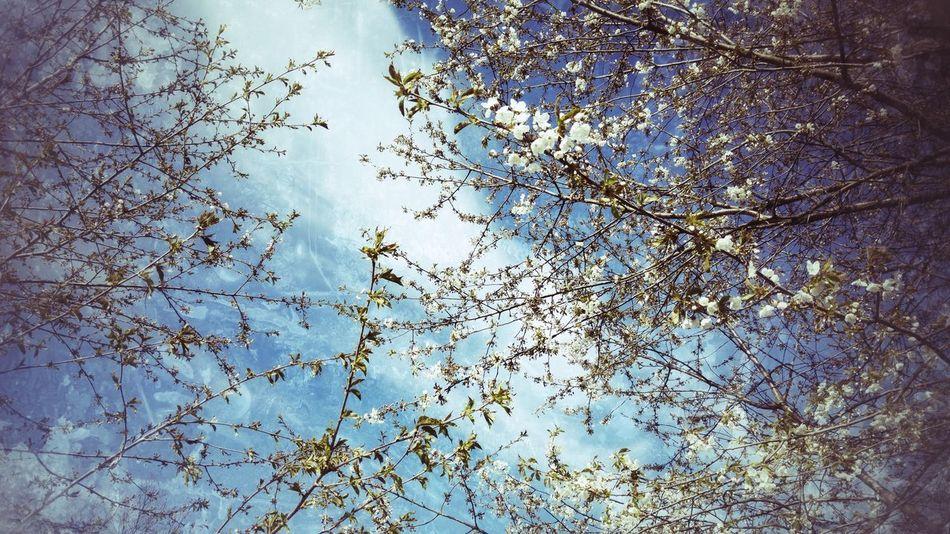 Sky Springtime Spring 2016 Frühlingsfarbe Frühling 2016 🌾 Frühlingserwachen Frühlingsgefühle Himmel Und Wolken EyeEm Best Edits EyeEm Best Shots - Nature EyeEm Gallery EyeEm Nature Lover EyeEm Best Shots