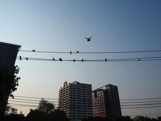 beautiful flying The Great Outdoors - 2016 EyeEm Awards Birds Flying Building Lumpini Park Bangkok Urbanexploration Urbanphotography Urban Lifestyle Urban Landscape The Street Photographer - 2016 EyeEm Awards Still Life Photooftheday EyeEmBestPics EyeEm Best Shots Nature EyeEm Nature Lover The Following My Commute The Essence Of Summer First Eyeem Photo Original Experiences Feel The Journey