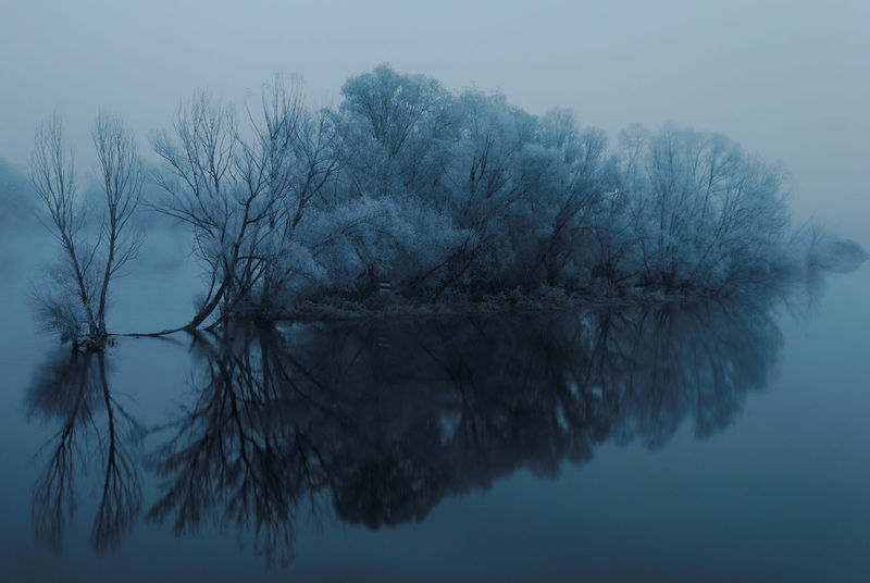 Frosty morning Bare Tree Branch Day Foggy Foggy Morning Hoarfrost Hoarfrost On The Tree Lake Lake View Mist Nature Nature Photography No People Outdoors Reflection River River Reflection River View Sky Tree Trees Water White Frost Winter Wintertime
