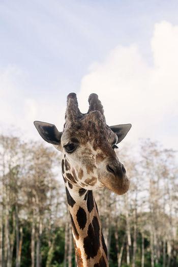 View of a giraffe