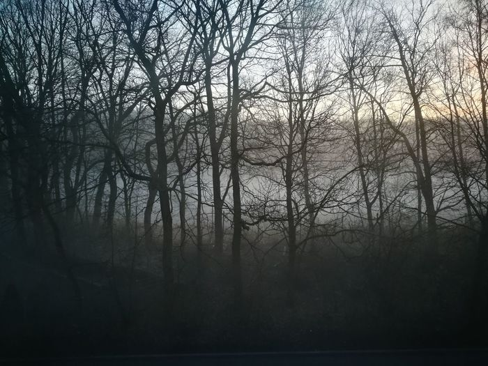 Silhouette bare trees in forest during foggy weather