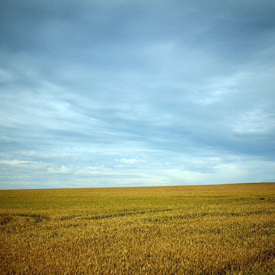 Agriculture Beauty In Nature Cereal Plant Cloud - Sky Crop  Day Ear Of Wheat Farm Field Growth Horizon Over Land Landscape Nature No People Outdoors Rural Scene Scenics Sky Tranquil Scene Tranquility