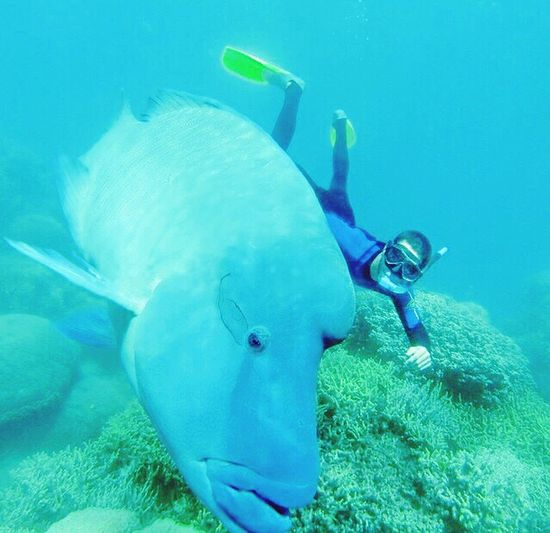 Divin' with the Bass! Scuba Diving Diving Seychelles