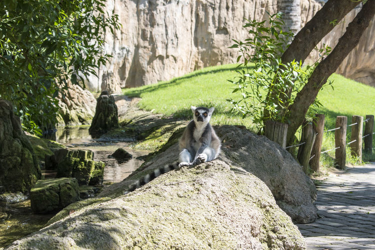 Bioparc Green Color Lemurs Of Madagascar Nature Relaxing Valencia, Spain Animal Animal Themes Animal Wildlife Animals In The Wild Beauty In Nature Lemur Lemur Close Up Lemurs Lemurs On Tree Madagascar  Mammal Naturaleza Nature No People One Animal Outdoors Plant Tree Vertebrate