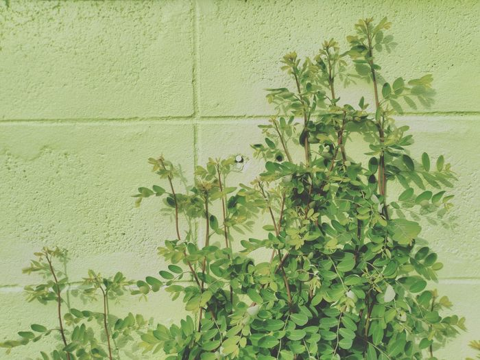 Close-up of plants against wall