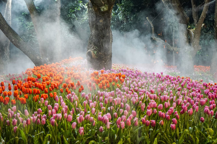 Tulips garden at night Plant Flower Flowering Plant Nature Beauty In Nature Growth Freshness Land Multi Colored No People Day Field Flowerbed Outdoors Tree Landscape Scenics - Nature Environment Travel Destinations Travel Ornamental Garden