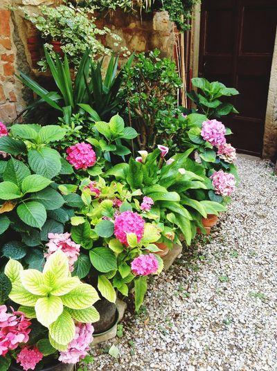 Spring Into Spring Toscana