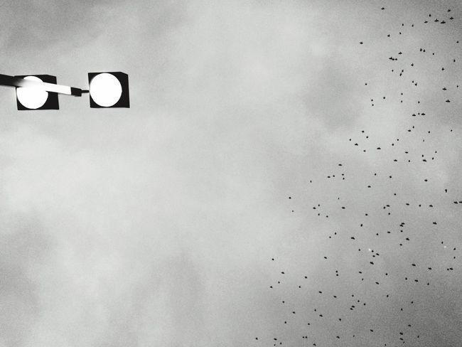 Black & White Birds Sky Sky Collection