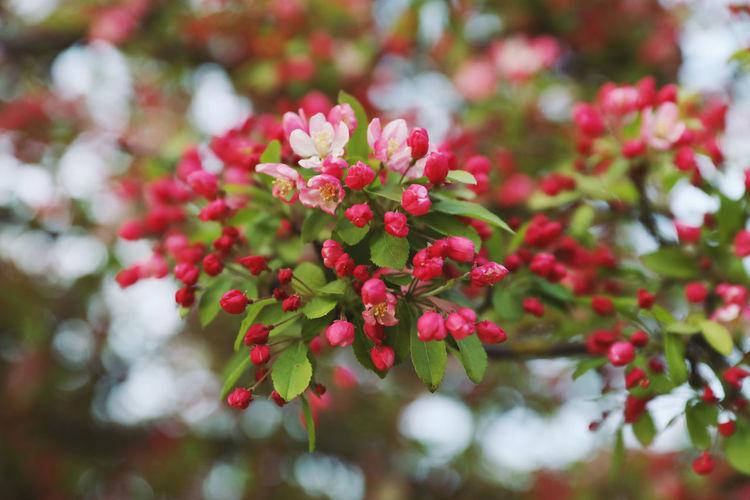 Pink berries on