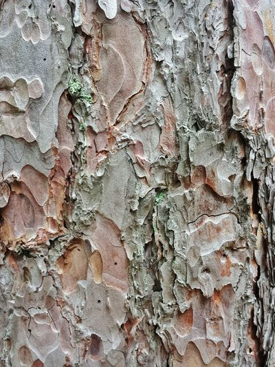 bark texture, red pine. Red Pines Bark Bark Texture Bark Texture Background Treelovers Tree Trunk Tree Bark Trees Collection Tree Nature Nature_collection Nature Photography Naturelovers North Woods  Northwoods Organic Shapes Backgrounds Background Texture