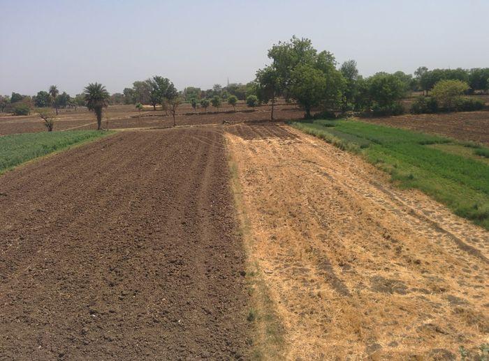 Rural Scene Landscape Plant