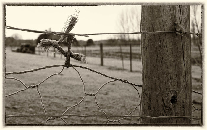 Twine Wintertime Barbed Wire Beauty In Nature Close-up Day Fence Post Focus On Foreground Frosty Knot Knots Nature No People Outdoors Protection Safety Sky Tree Wire Fence Wire Fencing