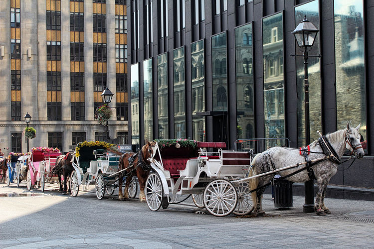Horse carts on city street