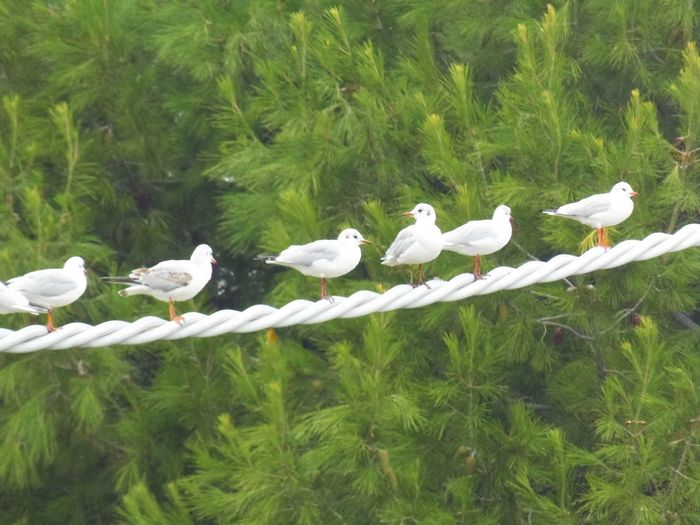 Abruzzo, Italia Gabbiani.... Van Gango Animal Themes Animal Wildlife Beauty In Nature Bird Day Flock Of Birds Green Color Group Of Animals Large Group Of Animals No People Plant White Color