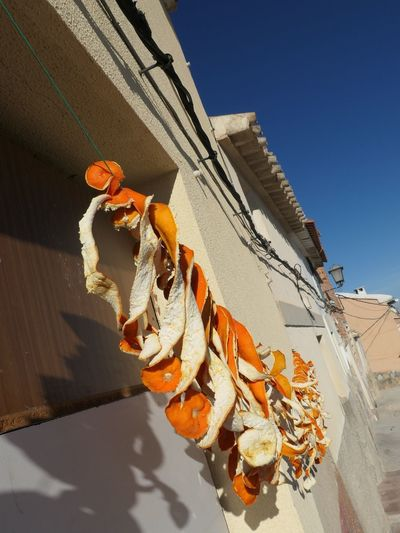 Orange Peel Garlands in Mula, Spain EyeEm Selects Orange Peel Orange Orange Color Nature Sky Sunlight Day Architecture No People Low Angle View Building Exterior Clear Sky Built Structure Building Plant Outdoors Hanging Decoration Shadow Flower Flowering Plant Growth Blue My Best Photo
