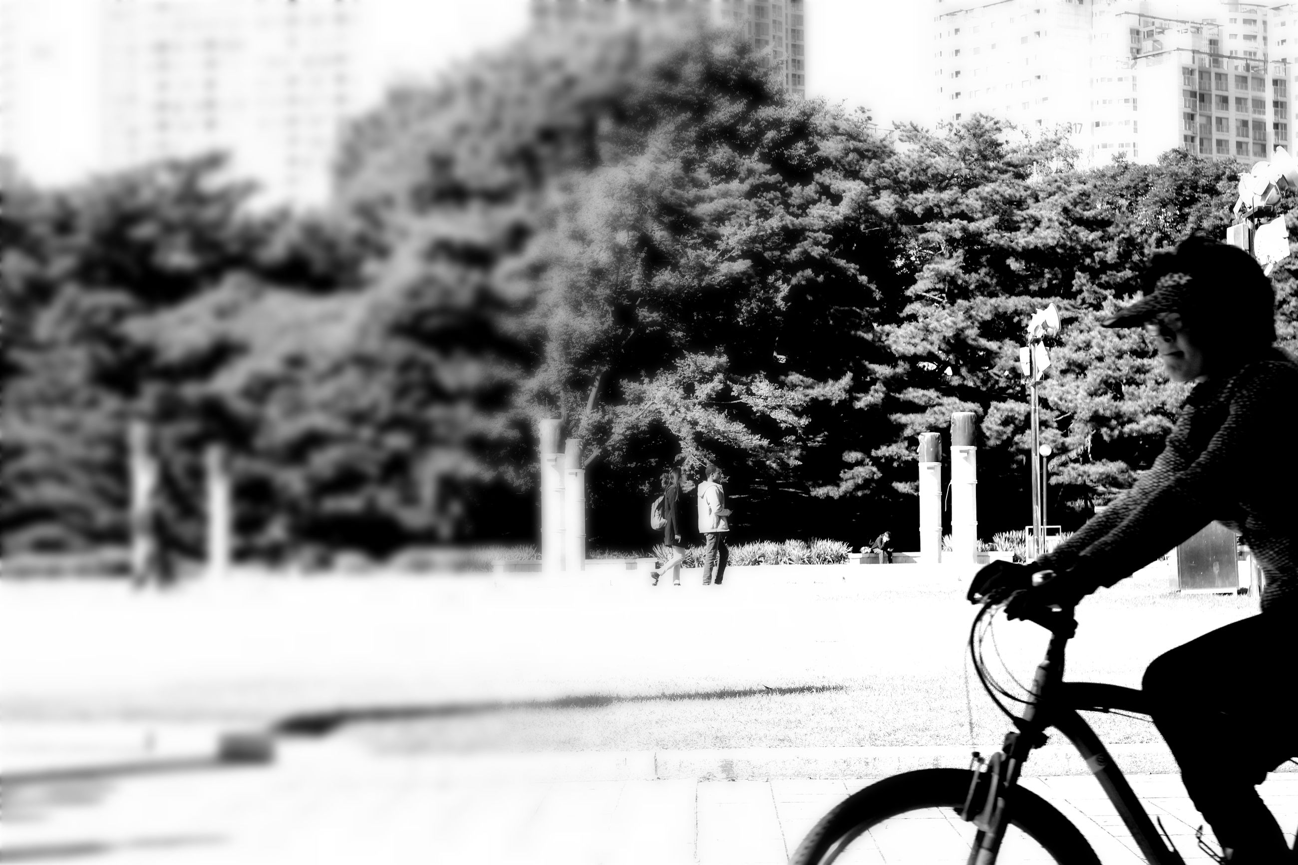 bicycle, mode of transport, tree, transportation, outdoors, city, cycling, day, no people