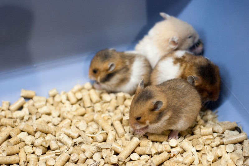 Animal Animal Themes Close-up Cute Day Focus On Foreground Hamsters Mammal Nature No People Rodent Selective Focus Wildlife Young Animal Young Bird Zoology