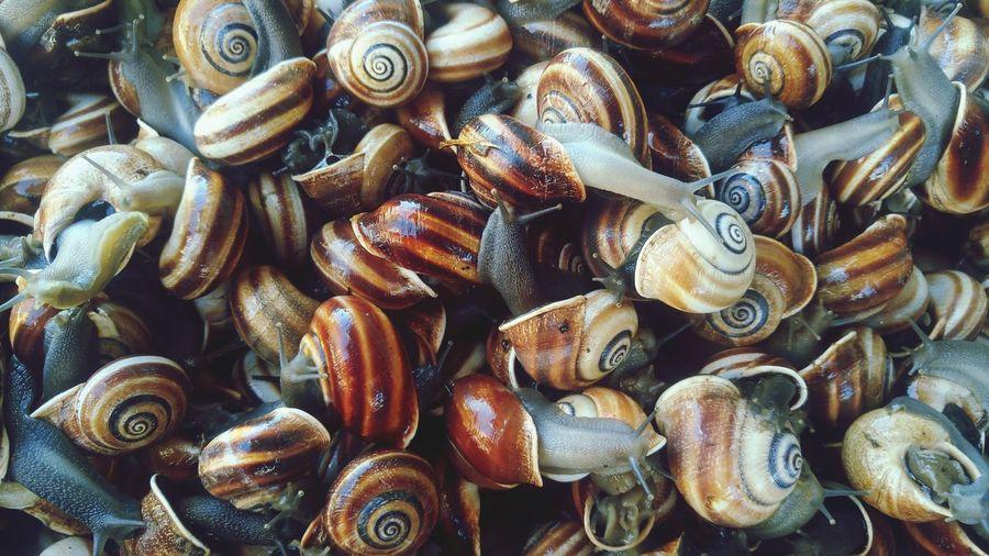 Full frame shot of snails seen through glass