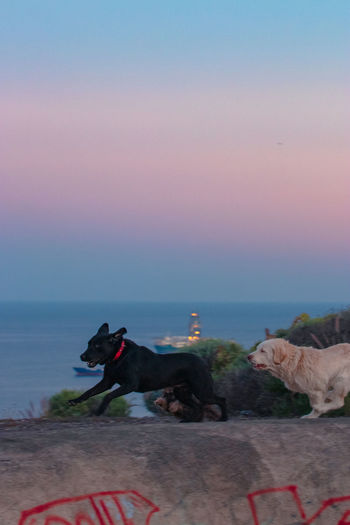 View of dog by sea against sky during sunset