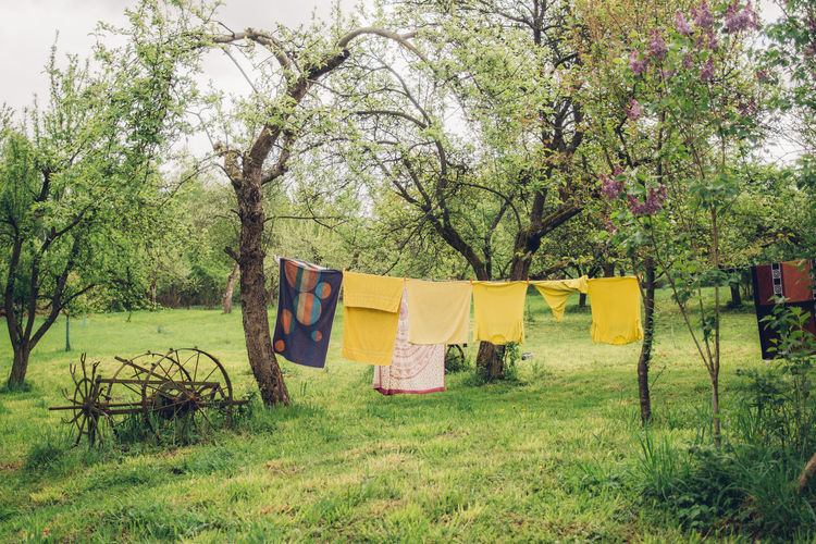 Laundry drying in a field hung on a line on trees Laundry Tree Plant Grass Hanging Land Field Nature Clothing Drying Tranquility Tranquil Scene