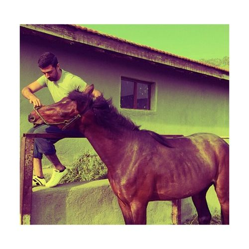 My horse ?