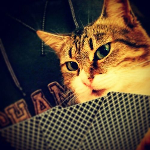 Photooftheday Popular Photos Pet Cat Catsofinstagram Check This Out Cool EyeEm Best Shots My Unique Style Popular