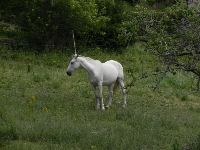 Is it a Horse, or a Unicorn? Mythical Creature Unıcorn White Horse Countryside Green Field Horse Horse Without A Rider Single Animal