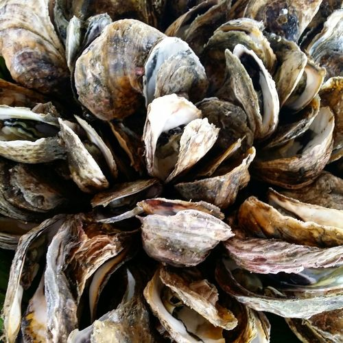 No pearls yet. Oyster  Seafood Freshcatch Underthesea Coastal Life Roxas City Travel Food Earthtones Resist Food Stories